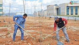 KAEÜ merkez yerleşkesi meyve ağaçları ile yeşillendiriliyor