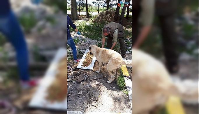 Uşak'ta sokak hayvanları unutulmadı