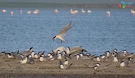 İnsansız doğaya kuş akını