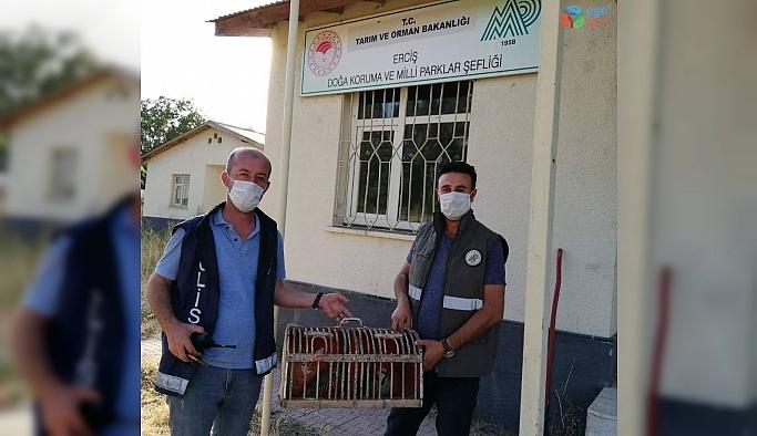Van'da kaçak avlanılan 2 kınalı kekliğe el konuldu