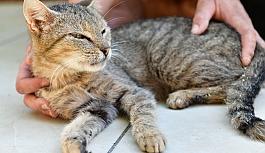 Çiğli Belediyesi ve Hayvan Dostlarından Büyük İşbirliği