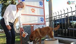 Başkan Tarhan, sokak hayvanlarını besledi