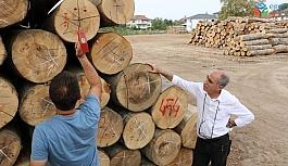 Düzce'de orman emvalinin kalitesi yükseltiliyor