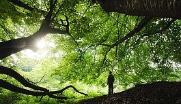 İnsanlar Neden Doğaya Bağlıdır?