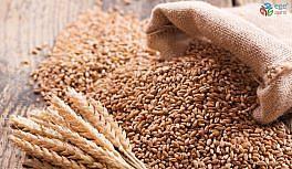 Söke TARİŞ buğday üreticilerinin güvencesi oldu