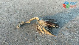 Bakan Pakdemirli'den Tuz Gölü'nde ölen flamingolarla ilgili açıklama: Hazırlanan ilk rapora göre herhangi bir zehirlenme yok