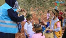 Minikler barış ve kardeşlik için zeytin topladı