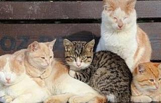 Hayvanları Koruma Kanunu TBMM Genel Kurulunda kabul...