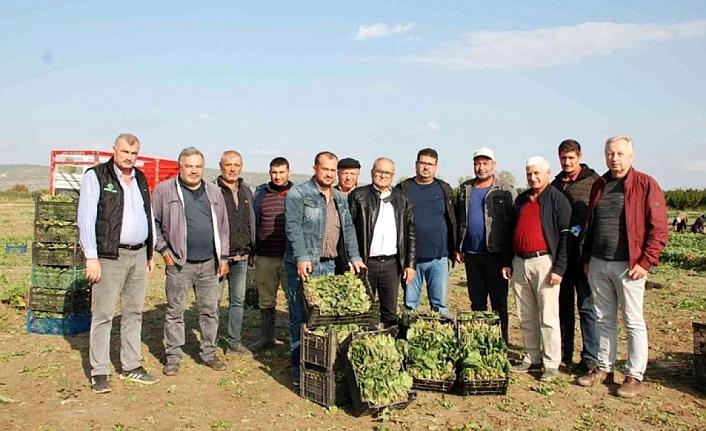 İzmirli ıspanak üreticileri o iddialar nedeniyle sıkıntıda